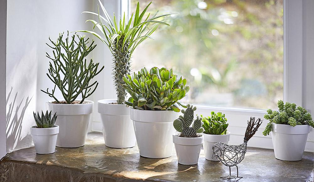 prendre-soin-de-ses-plantes-grasses_2