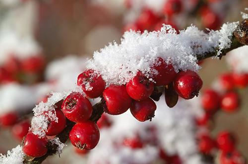 preparez-vos-plantes-a-l-hiver_30