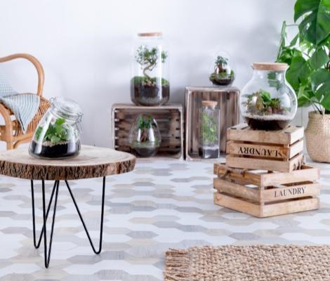 Que diriez-vous d'un terrarium ?