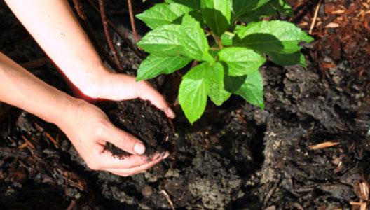 Du fumier composté pour nourrir mon sol