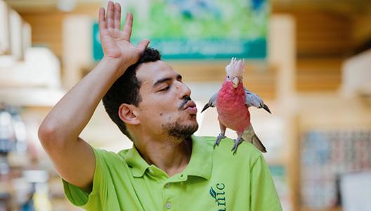Accueillir un perroquet