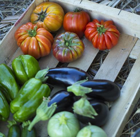 Alimentation diversifiée dès six mois