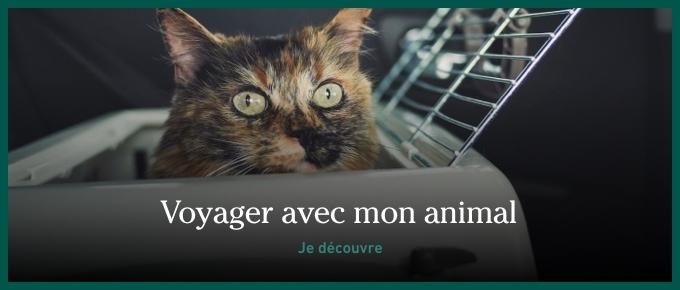 Chat dans une cage