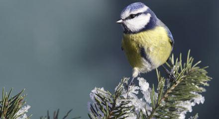 """Week-end """"Les oiseaux de nos jardins"""""""