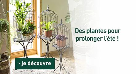 Edito_categorie_c-62651-des-plantes-pour-prolonger-l-ete