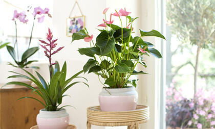 Les plantes faciles