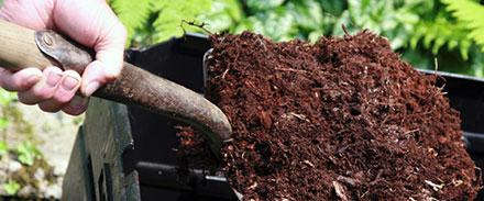 planter-un-arbre-en-bac-suivez-le-guide_60