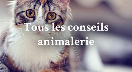 Edito_tous-les-conseils-animalerie