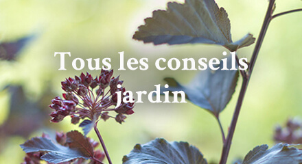 Edito_tous-les-conseils-jardin