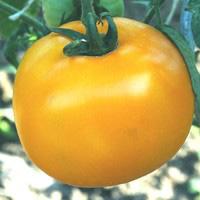 Tomate Lemon Boy