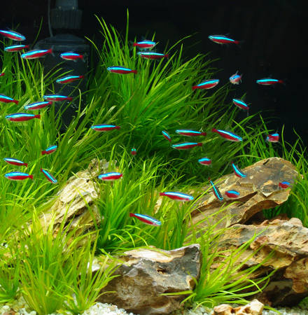 aquascaping-l-art-en-bac_3