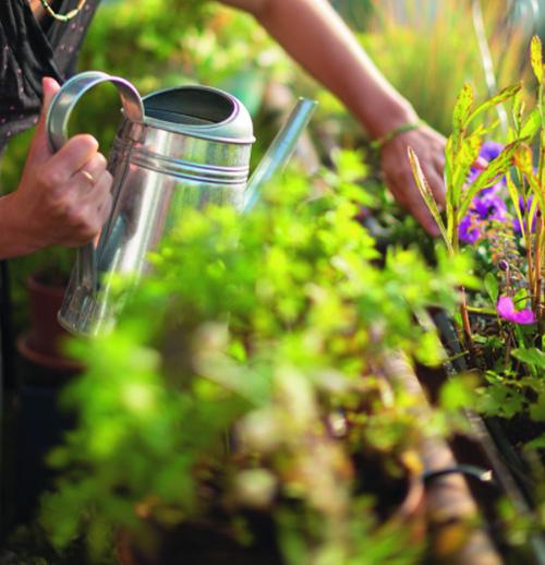 arroser-facilement-mes-plantes-sur-mon-balcon-et-ma-terrasse_2