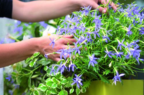 arroser-facilement-mes-plantes-sur-mon-balcon-et-ma-terrasse_4
