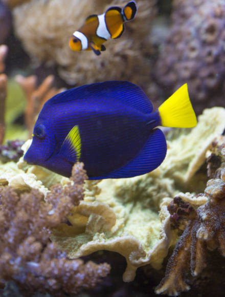 coraux-cultiver-l-alternative_3