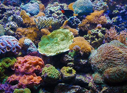 creer-un-aquarium-marin_3