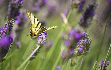 creez-votre-prairie-fleurie_2
