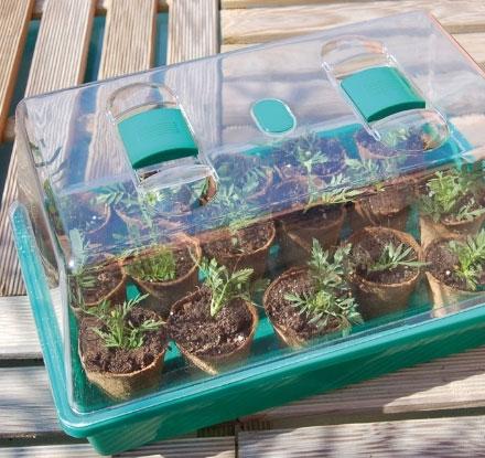 graines-de-jardiniers_4