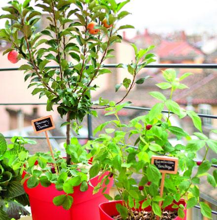 les-arbres-fruitiers-croquez-la-vie_2