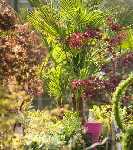 les-palmiers-d-interieur_4