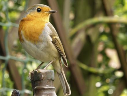 mangeoire-pour-oiseaux_6