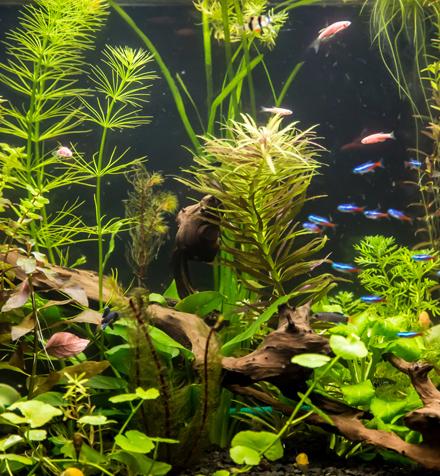 les plantes d 39 aquarium bien plus qu 39 un d cor conseil animalerie botanic botanic. Black Bedroom Furniture Sets. Home Design Ideas