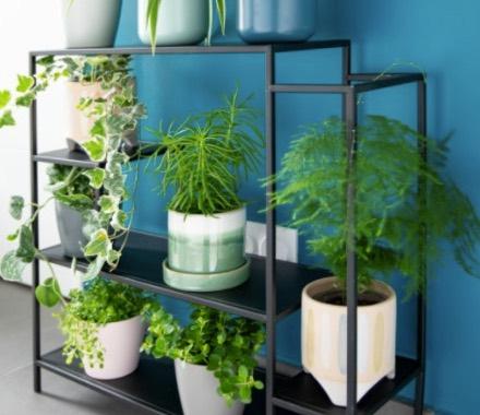 prendre-soin-de-ses-plantes-d-interieur_3