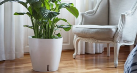 prendre-soin-de-ses-plantes-d-interieur_5