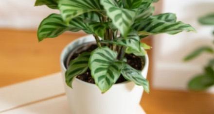 prendre-soin-de-ses-plantes-d-interieur_6