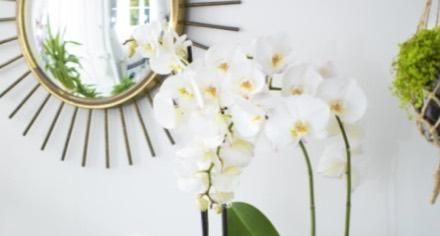 prendre soin de ses plantes d 39 int rieur conseil jardin botanic botanic. Black Bedroom Furniture Sets. Home Design Ideas