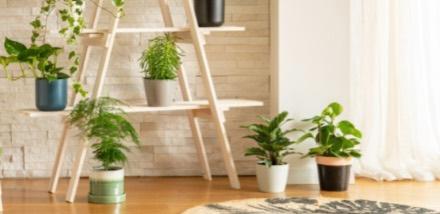 prendre-soin-de-ses-plantes-d-interieur_4