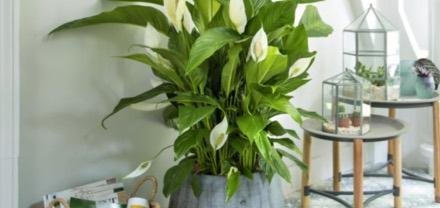 prendre-soin-de-ses-plantes-d-interieur_8