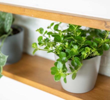 rempoter-les-plantes-vertes_4