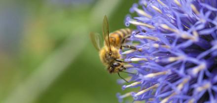 se-lancer-dans-l-apiculture_2