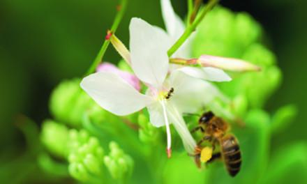 se-lancer-dans-l-apiculture_4
