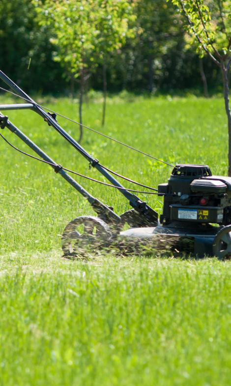 Semer et entretenir son gazon et sa pelouse conseil for Semer le gazon au printemps