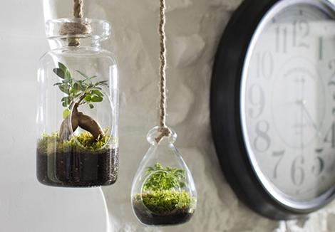 terrarium-diy-vegetal-deco_3