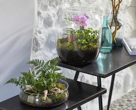 terrarium-diy-vegetal-deco_4