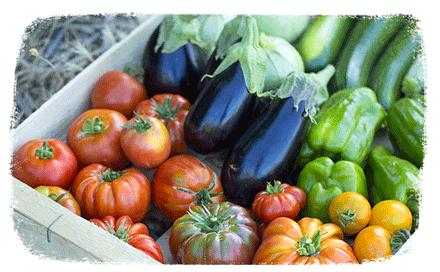 Conseils jardin astuces et conseils jardin botanic botanic for Conseil du jardinier
