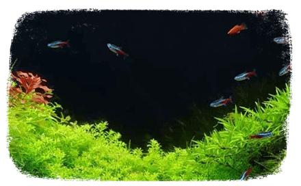 La qualité de l'eau d'un aquarium