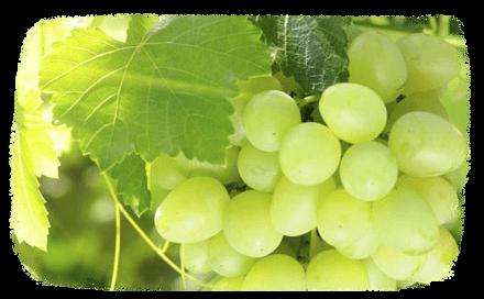 Le vin bio