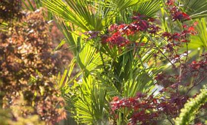 Palmier d'intérieur : une petite oasis exotique à la maison
