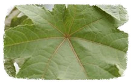 Les plantes naturellement répulsives
