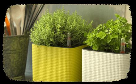 botanic. Black Bedroom Furniture Sets. Home Design Ideas