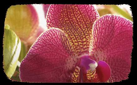 Prendre soin de son orchidée