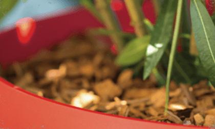 Rempoter les plantes vertes