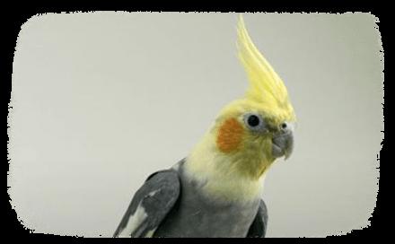 Un perroquet sous son toit