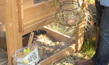 Une alimentation saine pour nos poules