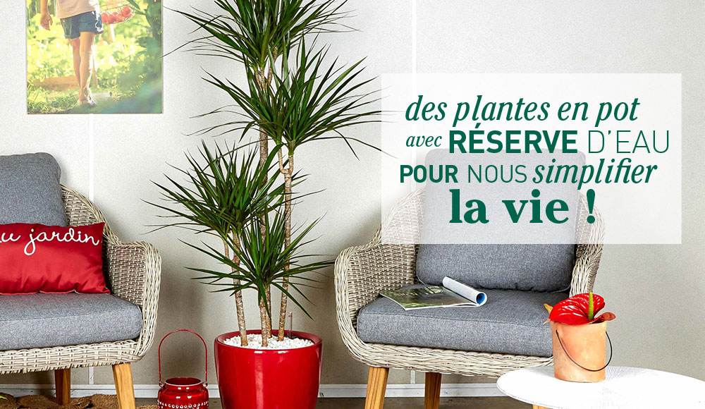 collection-plantes-pots-lechuza_1