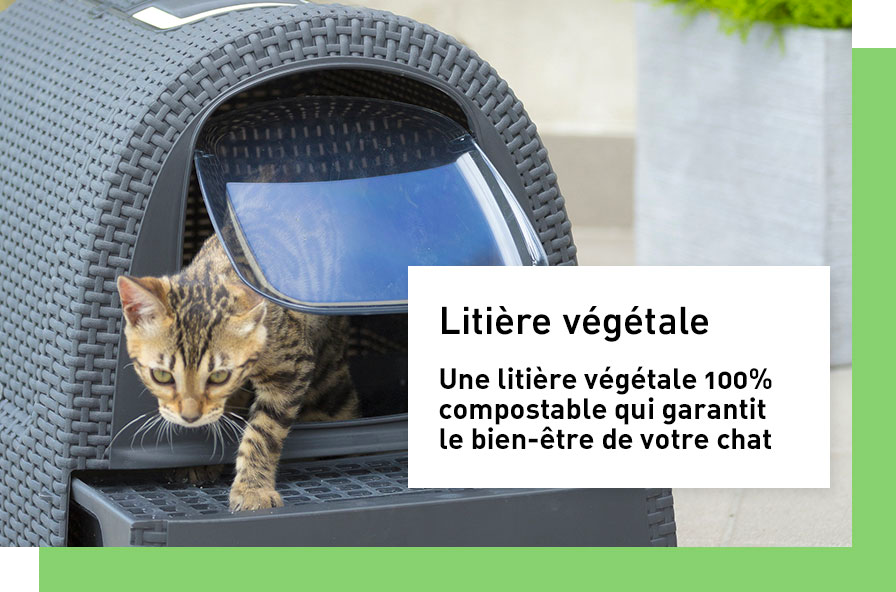 litiere-chat_1