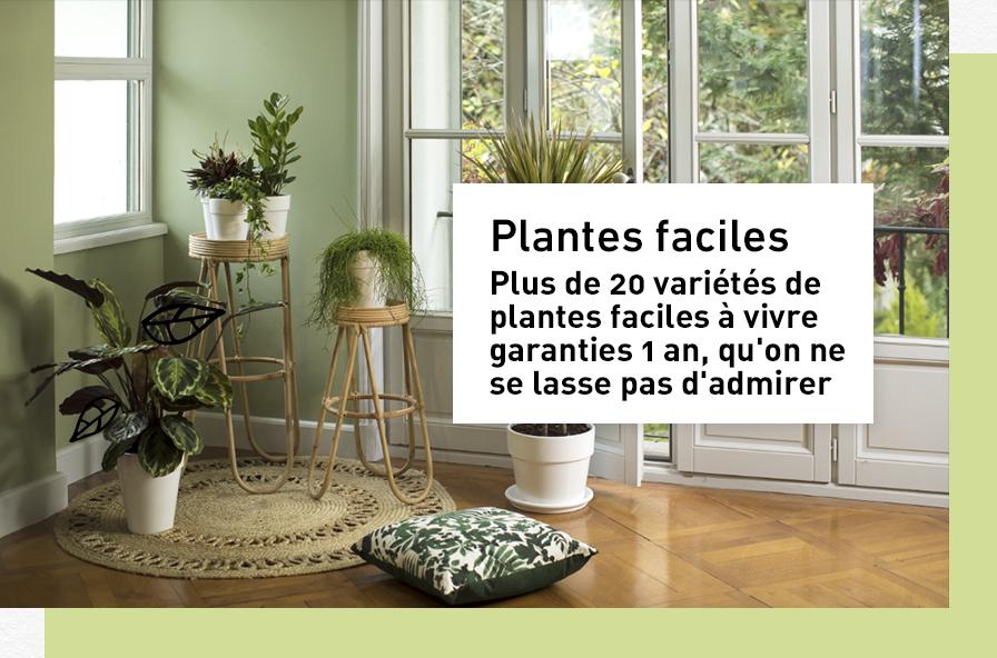 plantes-faciles_1